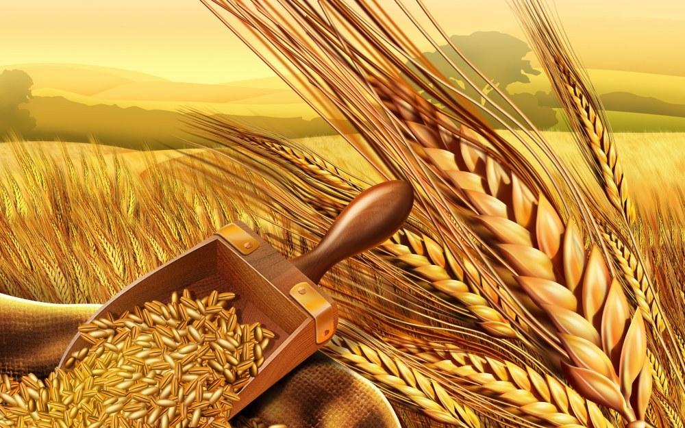 Εποπτικό υλικό: Κύκλος ψωμιού (3/6)